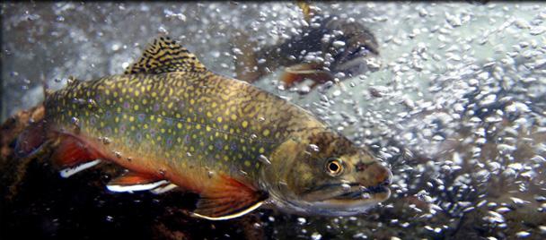 wyoming fly fishing, laprele | laprele fly fishing & hunting preserve, Fly Fishing Bait